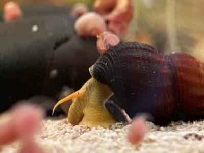 categorie escargots