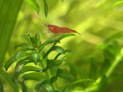 categorie plantes